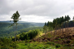 Ardennes. A view over the Ardennes mountain range royalty free stock photos