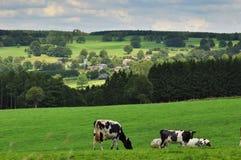 Ardennes Immagine Stock