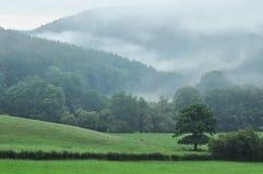 Ardennes Royaltyfria Bilder