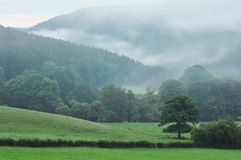Ardennes. A foggy landscape of the Ambleve valley in the Ardennes near Stavelot, Belgium royalty free stock images