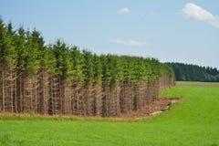 Ardennes krajobraz fotografia royalty free