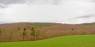 Ardennes landscape with a lush meadow and layers of bare deciduous and pine trees under a cloudy sky. Ardennes landscape with a lush meadow and layers of barre Stock Images