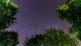 Ardennes night sky timelapse stock footage