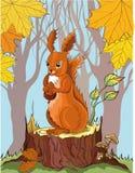 Ardilla con la bellota en bosque del otoño Imágenes de archivo libres de regalías