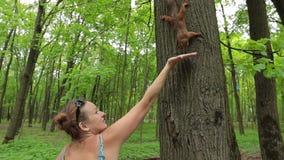 Ardilla de alimentación de la mujer joven en bosque almacen de metraje de vídeo
