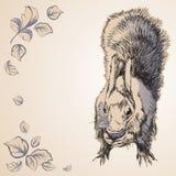 Ardilla del roedor en un estilo de la historieta con las flores Imagen de archivo libre de regalías