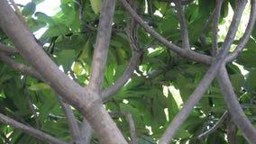 Ardilla en árbol almacen de metraje de vídeo