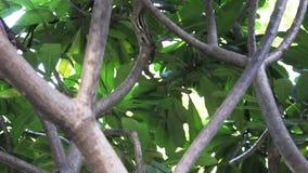 Ardilla en árbol almacen de video