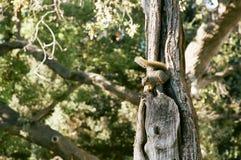Ardilla en árbol Foto de archivo
