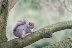 Ardilla en árbol del parque Fotografía de archivo libre de regalías