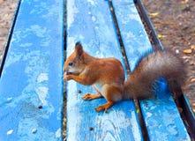 Ardilla en parque de la ciudad Fotografía de archivo libre de regalías