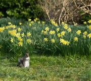 Ardilla en primavera Imagen de archivo libre de regalías