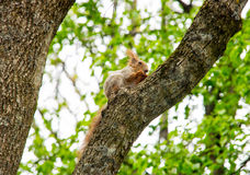 Ardilla en un árbol Fotos de archivo
