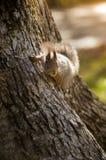 Ardilla en un árbol en el parque Imágenes de archivo libres de regalías