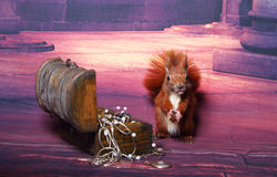 Ardilla linda Imagen de archivo libre de regalías