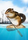 Ardilla listada animal que flota lejos de la contaminación de la ciudad, ecología c foto de archivo