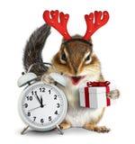 Ardilla listada divertida con los cuernos de la caja y de los ciervos de regalo de la Navidad en blanco Foto de archivo libre de regalías