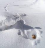 Ardilla listada en agujero en invierno Foto de archivo