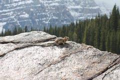 Ardilla listada fotogénica de la montaña Foto de archivo