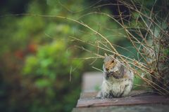 Ardilla que come la nuez en un parque Foto de archivo libre de regalías
