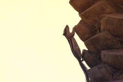 Ardilla que sube en la palmera de la fecha Imagen de archivo