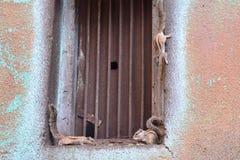 Ardillas que desayunan cerca de la ventana de la casa, Ahmadabad Fotos de archivo