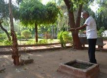 Ardillas que introducen del hombre mayor en el jardín Foto de archivo libre de regalías