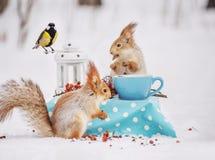 Ardillas y paro de los pájaros comer nueces en la tabla en la instalación de hadas del bosque del invierno foto de archivo