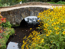 ARDINGLY, SUSSEX/UK - 9 ΟΚΤΩΒΡΊΟΥ: Μαύρος-eyed λουλούδια της Susan από το α Στοκ Εικόνες