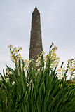 Ardmore tower in spring Stock Images