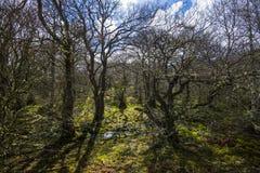 Ardvasar, Schotland - dichte en verwarde bossen op de lagere hellingen van Craig Meagaidh - in de Hooglanden van Schotland stock afbeelding