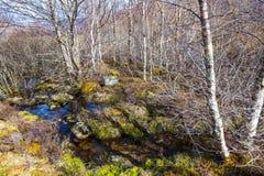 Ardvasar Skottland - täta och tilltrasslade skogsmarker på de lägre lutningarna av Craig Meagaidh - i Skotska högländerna av Skot Royaltyfri Fotografi