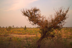 Area around Nagpur, India. Dry foothills with orchards (farmers gardens) Stock Photo