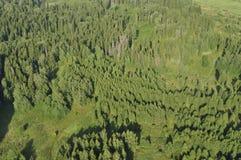 Area boscosa Fotografie Stock