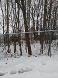 Area boscosa dietro il recinto collegato catena con le palle di neve e la neve fotografie stock libere da diritti