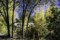 Area boscosa gialla Fotografia Stock Libera da Diritti