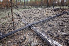 The area burnt by forest fire in taiga Royalty Free Stock Image