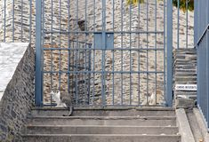 Area chiusa ai cani, pace per i gatti Fotografia Stock Libera da Diritti
