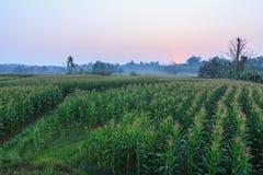 Area del cereale dell'azienda agricola di agricoltura Fotografia Stock