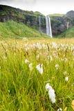 Area della cascata di Seljalandsfoss Immagini Stock Libere da Diritti