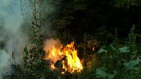 Area della combustione dell'incendio forestale ad uguagliare tempo con il lotto di fumo che aumenta nell'aria Le fiamme accendono stock footage