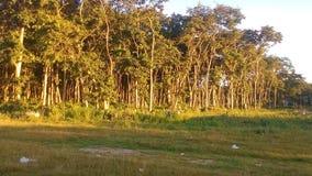 Area della foresta Immagini Stock Libere da Diritti