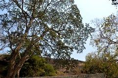Area della foresta in Mumbai India fotografia stock libera da diritti