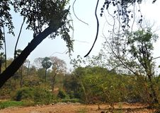 Area della foresta in Mumbai India immagini stock libere da diritti