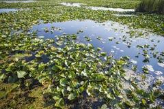 Area della palude nel parco nazionale di Pelee del punto Fotografie Stock