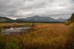 Area della zona umida vicino al lago Tahoe immagini stock libere da diritti