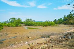 Area delle mangrovie, Ngwesaung, Myanmar fotografia stock