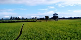 area di agricoltura fotografie stock