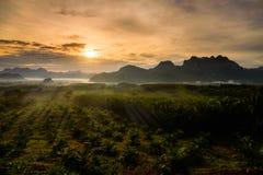 Area di agricoltura della palma da olio della siluetta nell'alba Fotografia Stock
