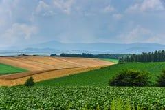 Area di agricoltura di BIei Immagine Stock